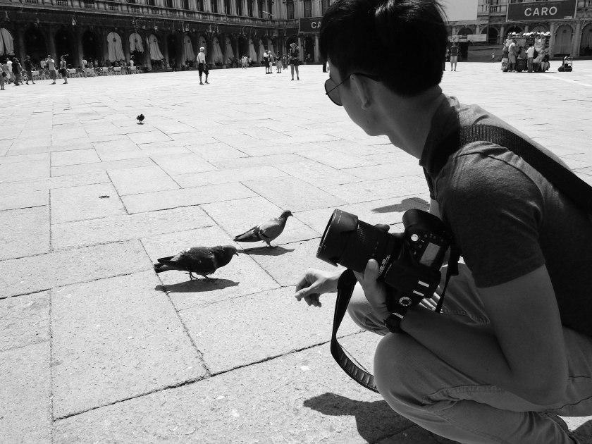 pigeons 1