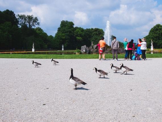 nymphenburg-birds