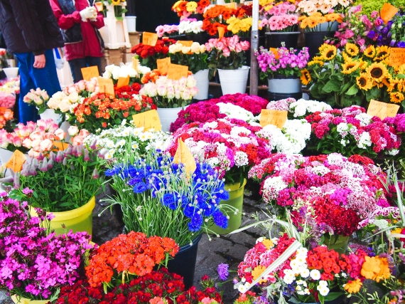 viktualienmarkt-flowers